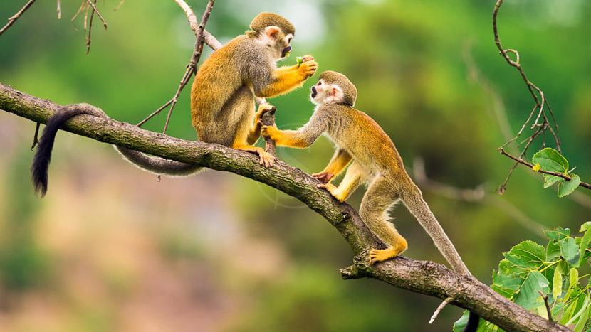 L'Amazonie équatorienne, Amazonie équatorienne, Equateur
