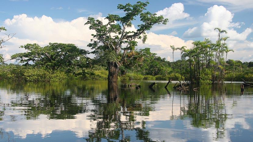 L'Amazonie équatorienne, Laguna Grande dans le parc national de Cuyabeno, Equateur