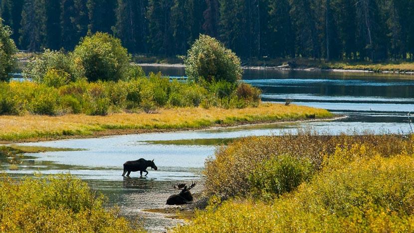 Parc national de Grand Teton, Grand Teton National Park, Etats-Unis © Shutterstock