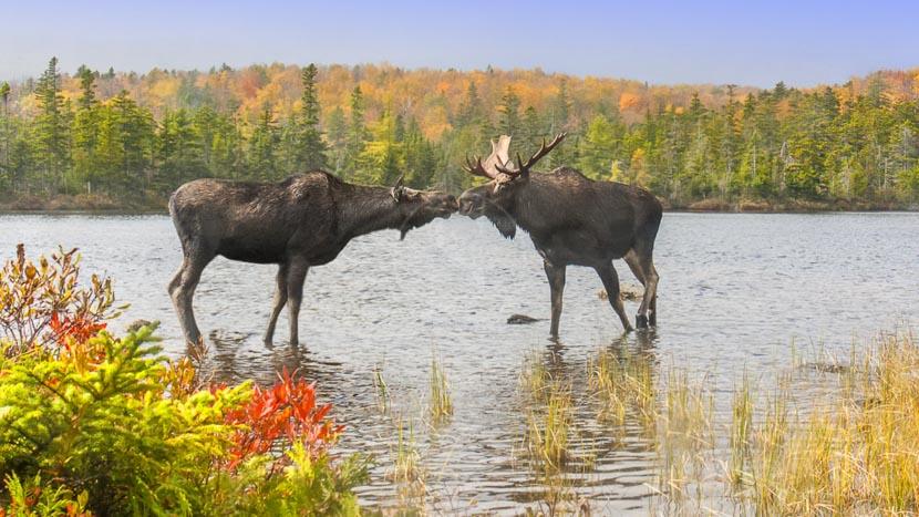Maine, Maine, Etats-Unis © Shutterstock