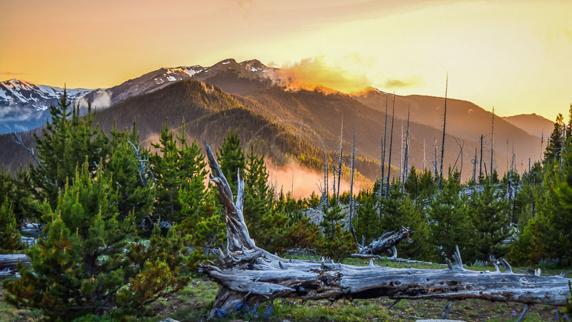 Parc national Olympique, Olympic National Park, Etats-Unis © Shutterstock