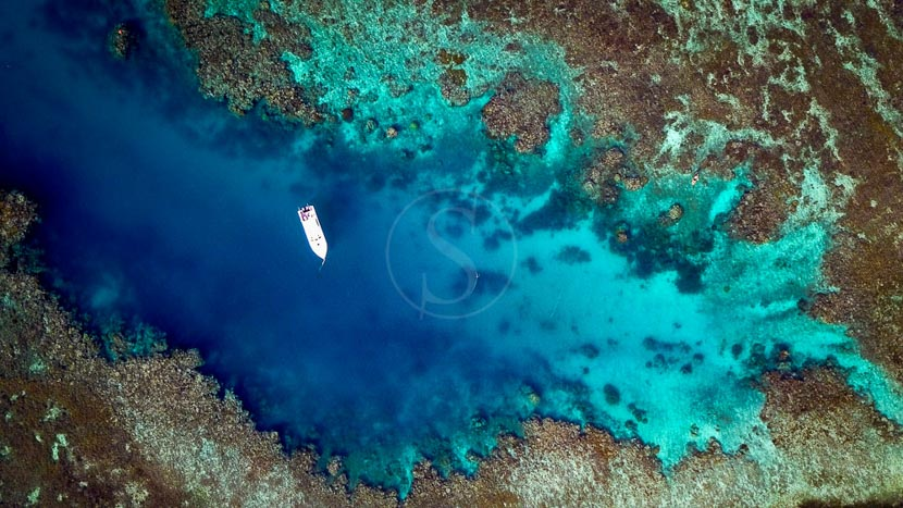 Iles Fidji, Vomo Coral Reefs, Iles Fiji © Shutterstock