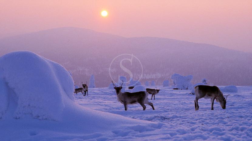 La Laponie, Ambiance de Finlande en hiver, Finlande