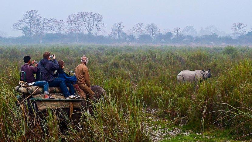 Parc national de Kaziranga, Safari à dos d'éléphant à Kaziranga, Inde © Gilles Georget