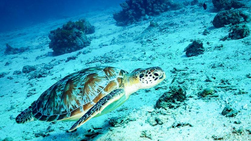 Amed et la plongée, Gili Islands, Indonésie