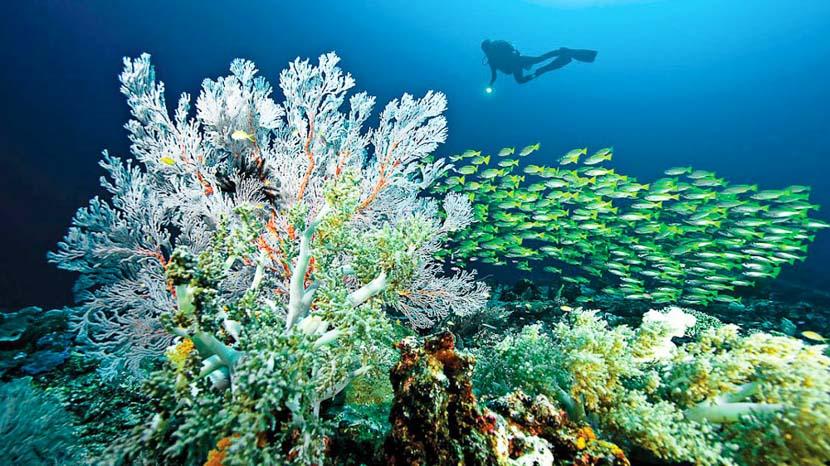 Îles Raja Ampat, Misool Eco Resort, Indonésie © Misool