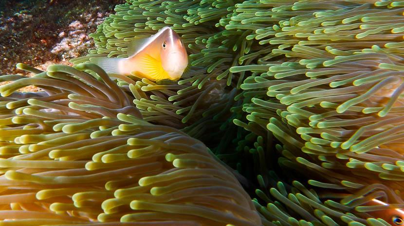 Îles Raja Ampat, Plongée à Raja Ampat © Sonia Rousseau