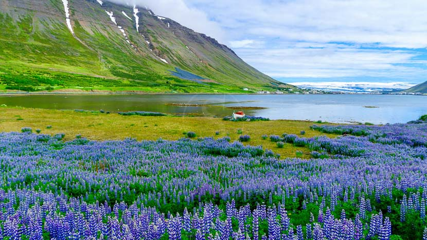 Islande, Westfjords, Islande © Sstock