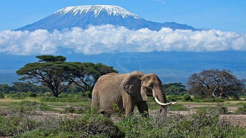 Parc national d'Amboseli, Ambiance d'Amboseli, Kenya