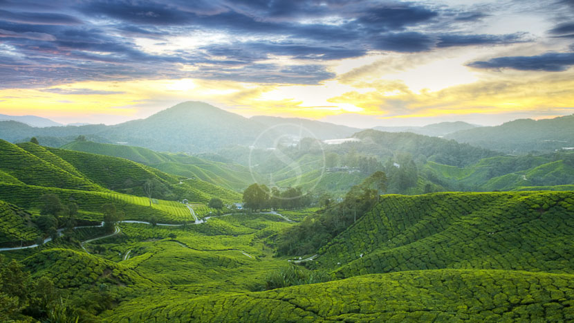 Les Cameron Highlands, Ambiance des Cameron Highlands, Malaisie