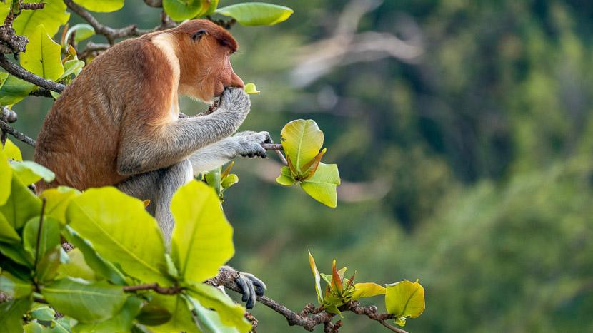 Sarawak, Parc national de Bako, Malaisie
