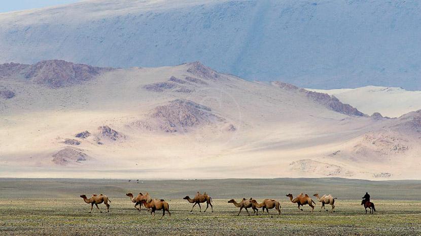 Randonnée à dos de chameau dans les dunes de sable du désert de Gobi, Steppe mongole, Mongolie © Bruno Morandi