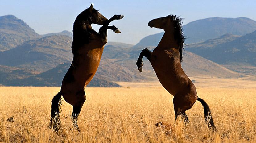 Lüderitz, Desert Horse Inn - Gondwana Collection, Namibie