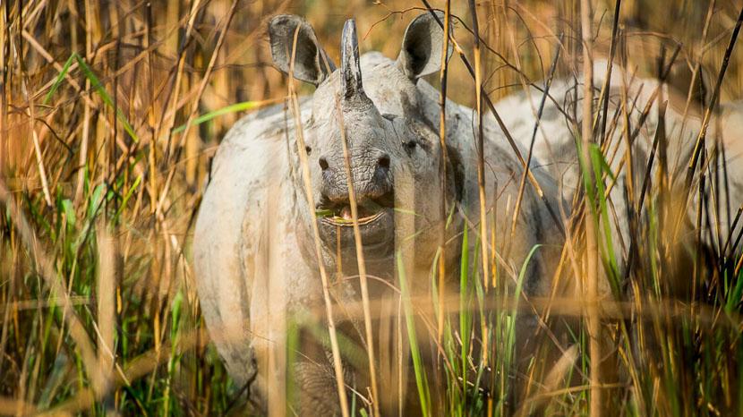 Parc national de Chitwan, Meghuali Serai à Chitwan, Népal
