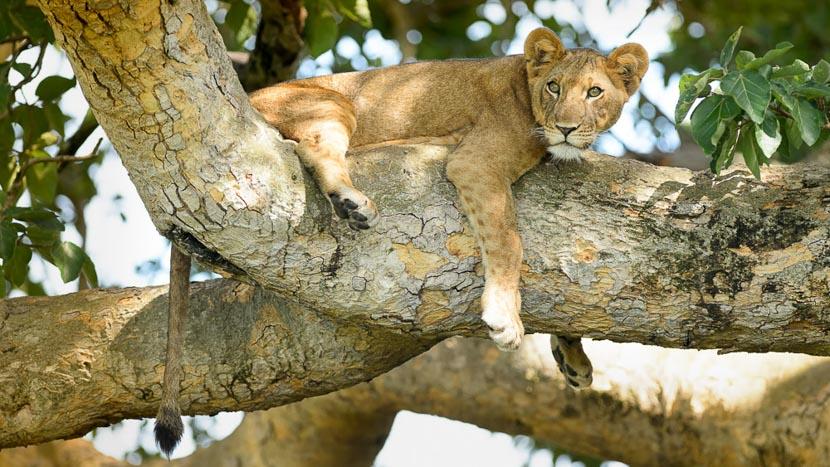 Ishasha, Parc National Queen Elizabeth, Parc Queen Elizabeth, Ouganda
