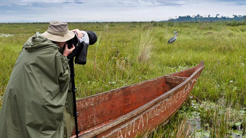 Le bec en Sabot et le marais de Mabamba, Recherche du Bec en Sabot, Ouganda © Christophe Courteau
