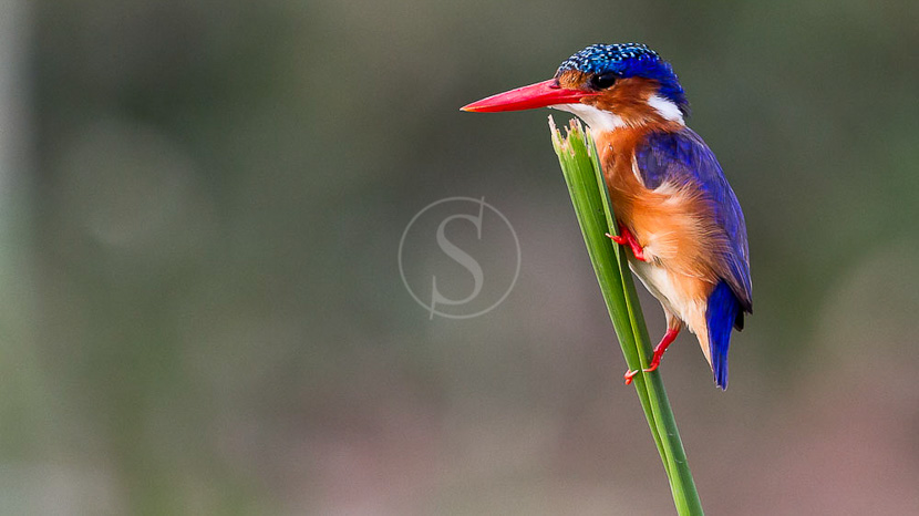 Mweya, Parc National Queen Elizabeth, Safari en Ouganda © Christophe Courteau