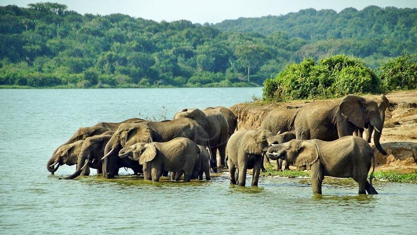 Mweya, Parc National Queen Elizabeth, Parc Queen Elizabeth, Ouganda