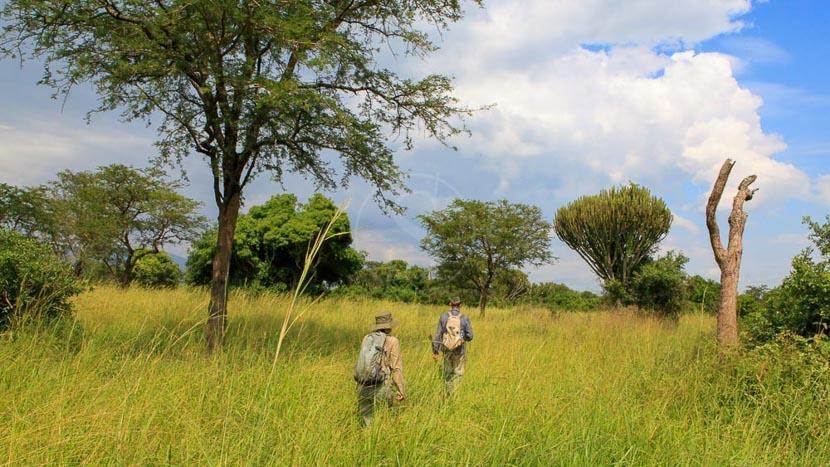 Parc national de Semliki, Semliki National Park, Ouganda © The Uganda Safari -C Steinberg