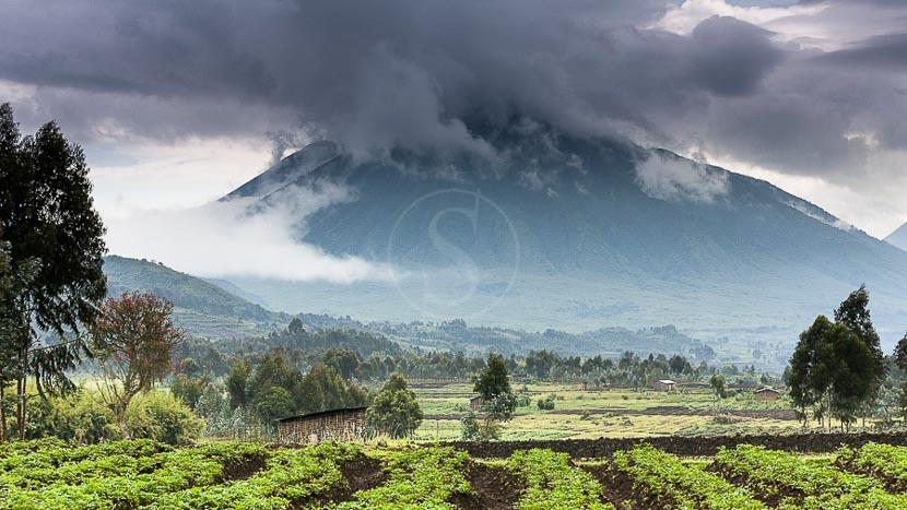 Rwanda, Gorille des montagnes, Rwanda © Christophe Courteau