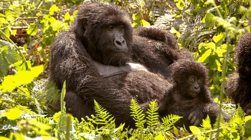 Rwanda,