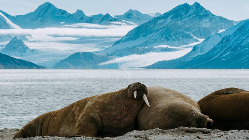 L'archipel du Svalbard, Découverte du Spitzberg, Norvège
