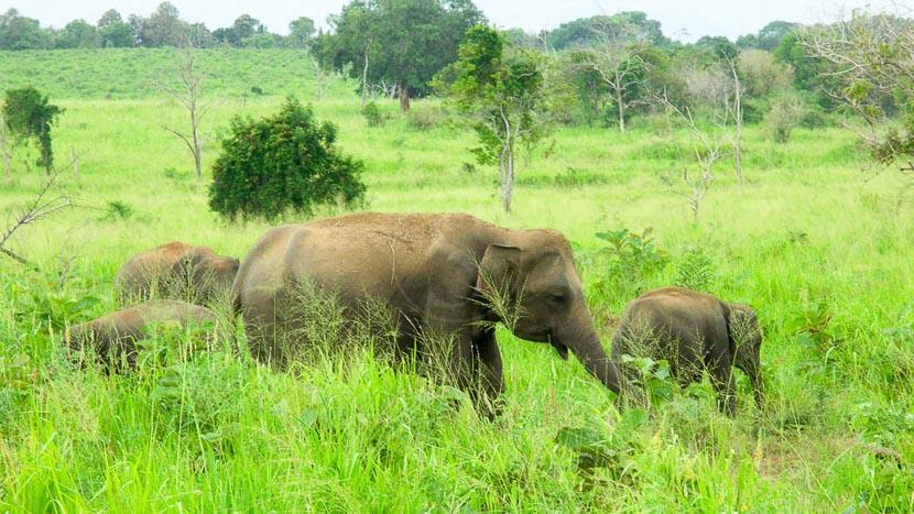 Parc national de Wilpattu, Sri Lanka © Gilles Georget