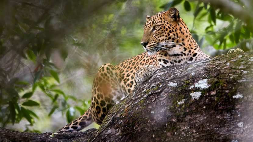 Parc national de Yala, Parc National de Yala, Sri Lanka