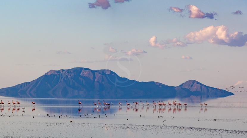 Lac Natron, Lac Natron, Tanzanie