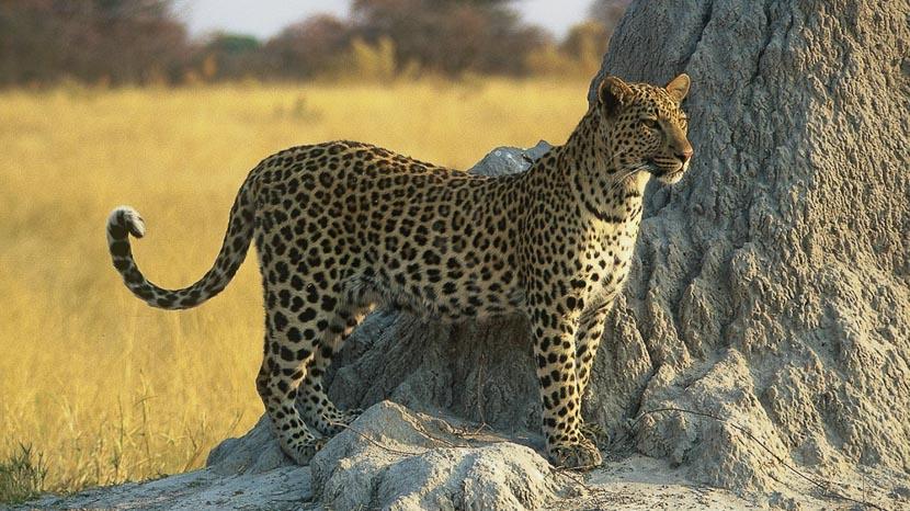Zambie, Tanzanie