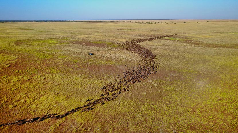Parc national de Liuwa Plain, Safaris à Liuwa Plains, Zambie © Time and Tide Will Burrard