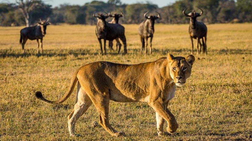 Zimbabwe, Linkwasha Camp, Zimbabwe © Dana Allen