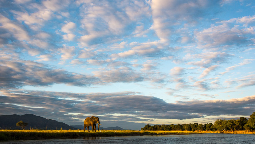 Zimbabwe, Ruckomechi Camp, Zimbabwe © Dana Allen